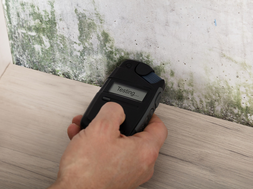 3 key reasons to schedule a mold inspection